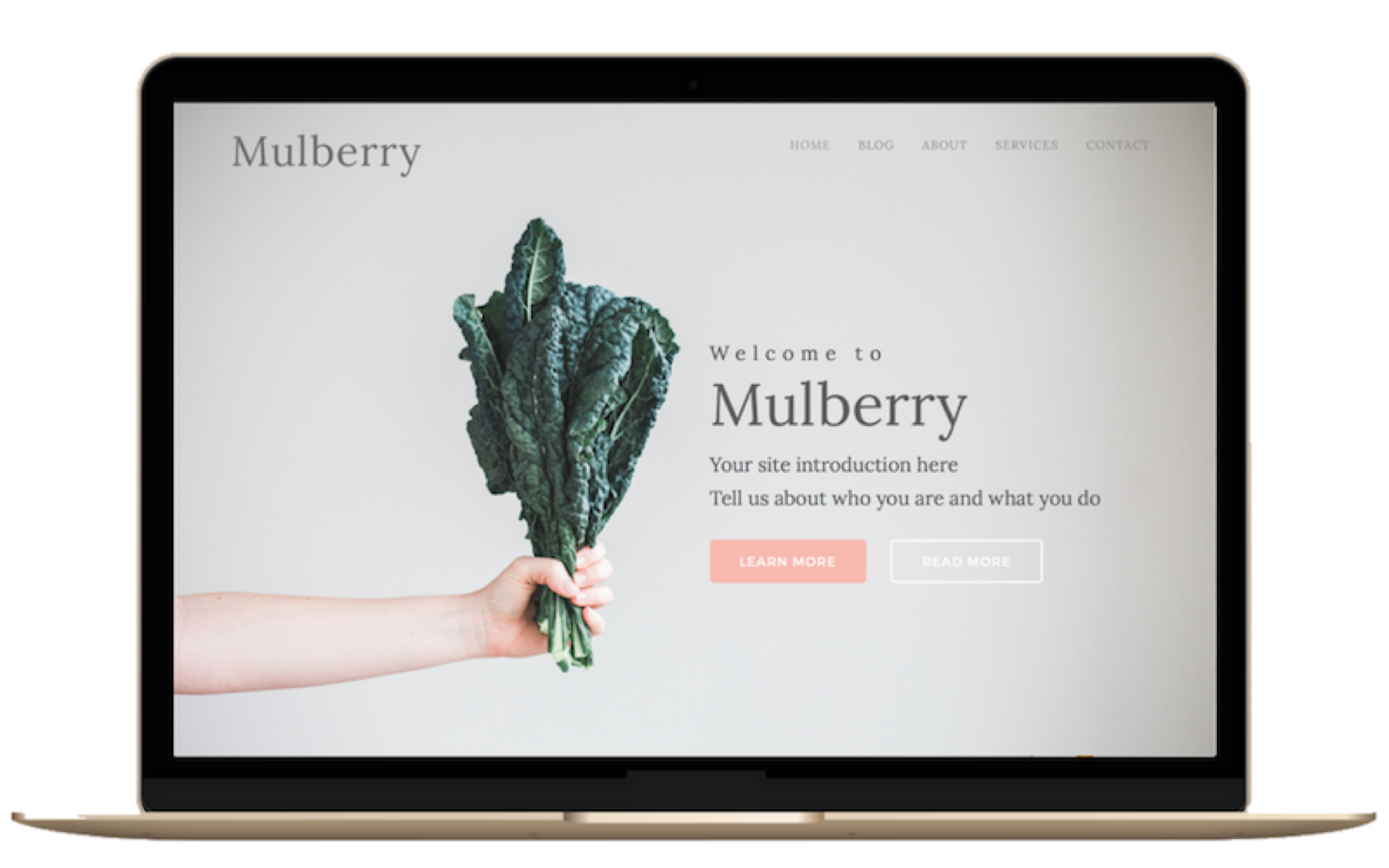 Purchase Mulberry